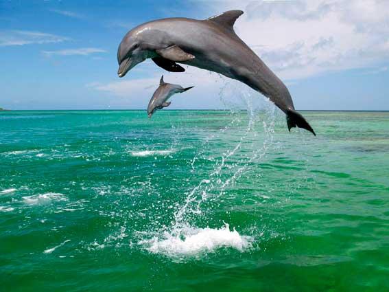 delfini_1