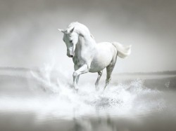 White-Horse-Water