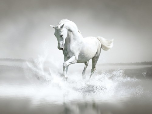 24_White-Horse-Water-500x375