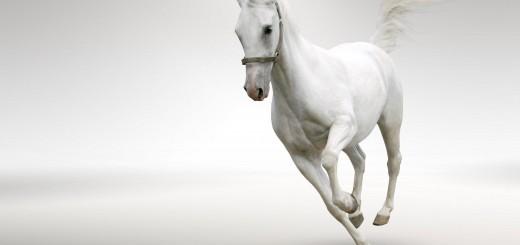 white-horse-running-hd-widescreen-s